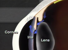 Fluid circulating inside eye